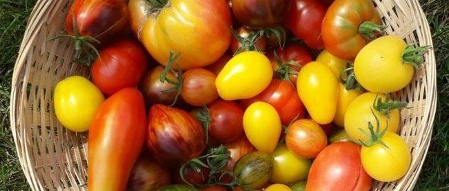 Kweek de sappigste tomaten in je eigen ACD<sup>®</sup> Prestige kas