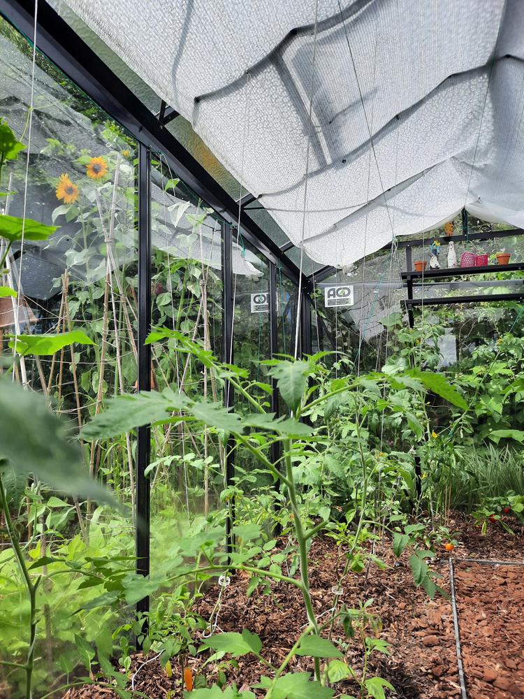 Gezonde groenten uit je eigen serre met respect voor de natuur: tips en tricks